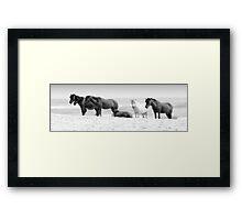 wild ponies Framed Print