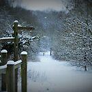 Winter, wild and meet by Matt West