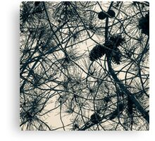 Pines & Branches Canvas Print