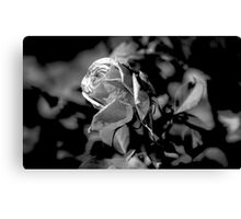 Rose In Black & White (2) Canvas Print