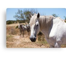 It's a Horse of Course Canvas Print