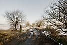 Winter Track by Nigel Bangert