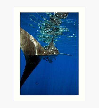 Whale Shark - Ningaloo Reef Art Print