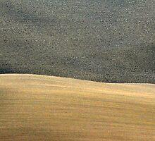 Fall Field in Tuscany-Pienza by Deborah Downes