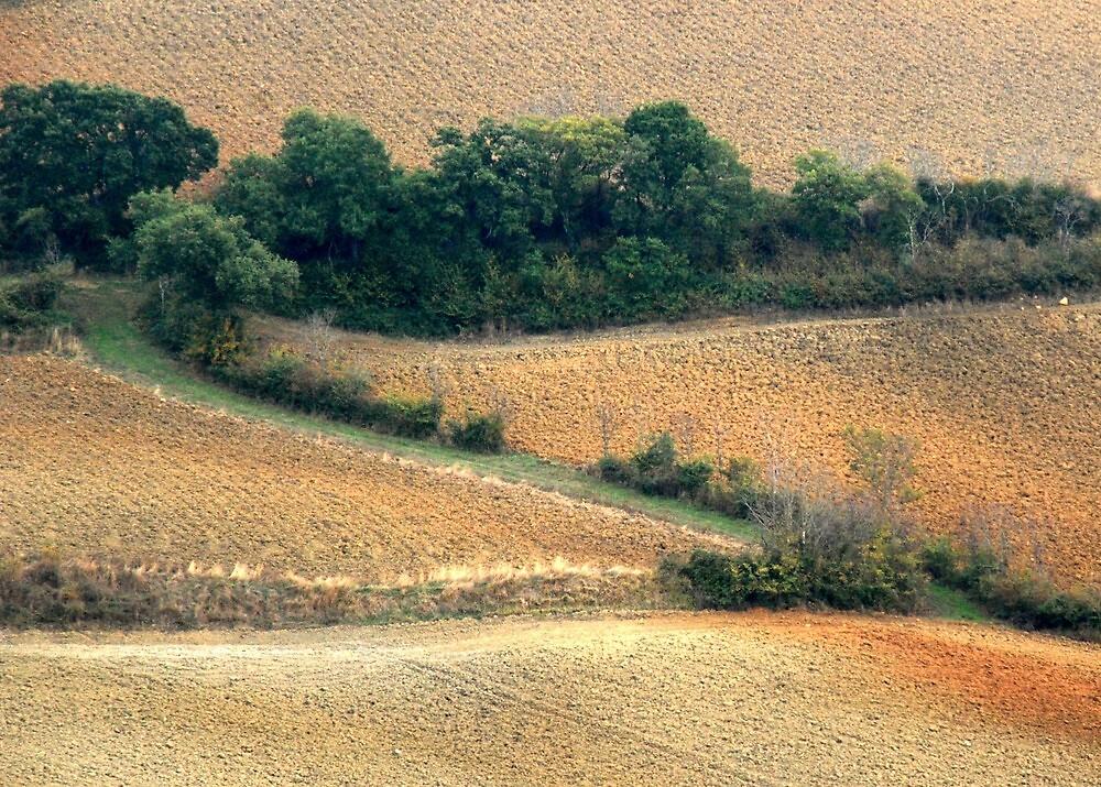 Tuscan Zigzag-Pienza by Deborah Downes