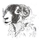 Swaledale Portrait 2 by Sue Nichol