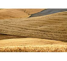 Tuscan Summer Wheat-Siena Photographic Print
