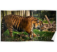 Prowess of a Tiger Poster