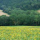 River of Life-near Tuscan village of Monalcino by Deborah Downes
