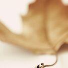 Autumn leaf by dhmig