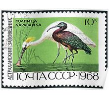 Fauna series The Soviet Union 1968 CPA 3676 stamp Eurasian Spoonbill and Glossy Ibis Astrakhan Nature Reserve cancelled USSR Poster