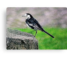 Fractalius Pied Wagtail Canvas Print