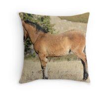 Pryor Mountain Foal Throw Pillow