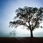 Oaks in the Mist by Geoff Spivey