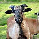 Friendly Animals (Saxony, Germany) by vbk70