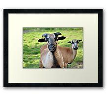 Friendly Animals (Saxony, Germany) Framed Print