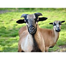 Friendly Animals (Saxony, Germany) Photographic Print