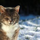 Winter cat by turniptowers