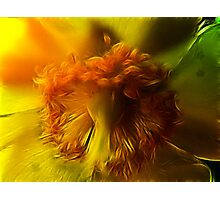 Redhead Rising Photographic Print