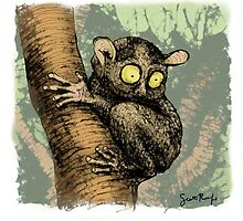 Tarsier in a tree by SRolfe