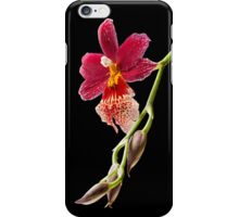 Orchid - 72 iPhone Case/Skin