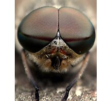Hoverfly Portrait  Photographic Print