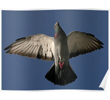 Under The Rock Dove Poster