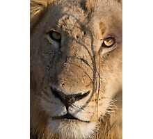 Majingilane - Male Lion - Close Up ! Photographic Print