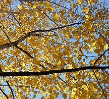 leaves of gold by poupoune