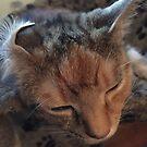 Cat Ear by Vixeth