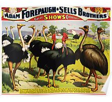 Poster 1890s A congress of the great birds of the world poster for Forepaugh and Sells Brothers ca 1898 USSR Poster