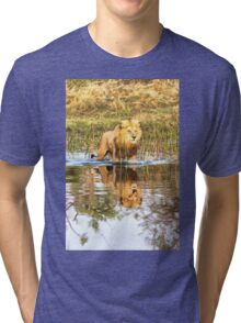 Lion in River with Reflection Tri-blend T-Shirt