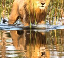 Lion in River with Reflection Sticker