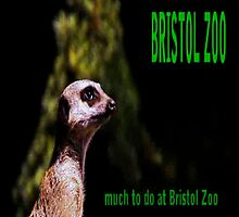 I Love Bristol Zoo - E-Book by Dawn B Davies-McIninch