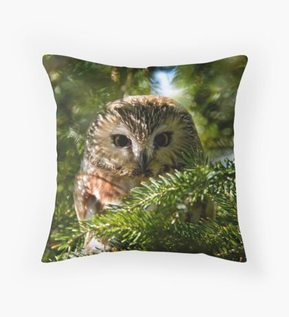 Northern Saw Whet Owl - Amherst Island, Ontario, Canada Throw Pillow