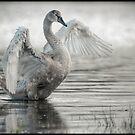 Swan by Henri Ton