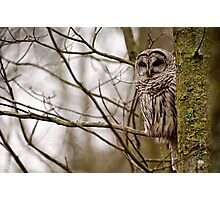 Barred Owl - Presqu'ile Park Photographic Print
