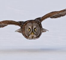 Great Gray Owl in Flight - Ottawa, Ontario Sticker