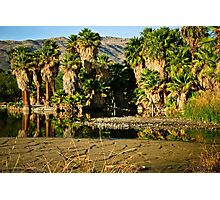 Palm Tree Reflections Photographic Print