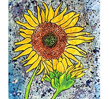 Sunflower ~ A collaboration Photographic Print