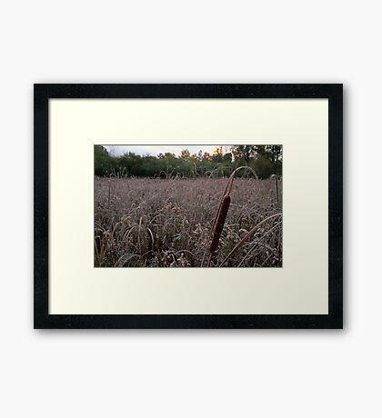 Cattail at Dawn Framed Print