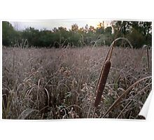 Cattail at Dawn Poster