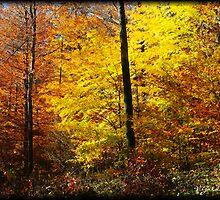 Aglow! (Autumn) by vigor