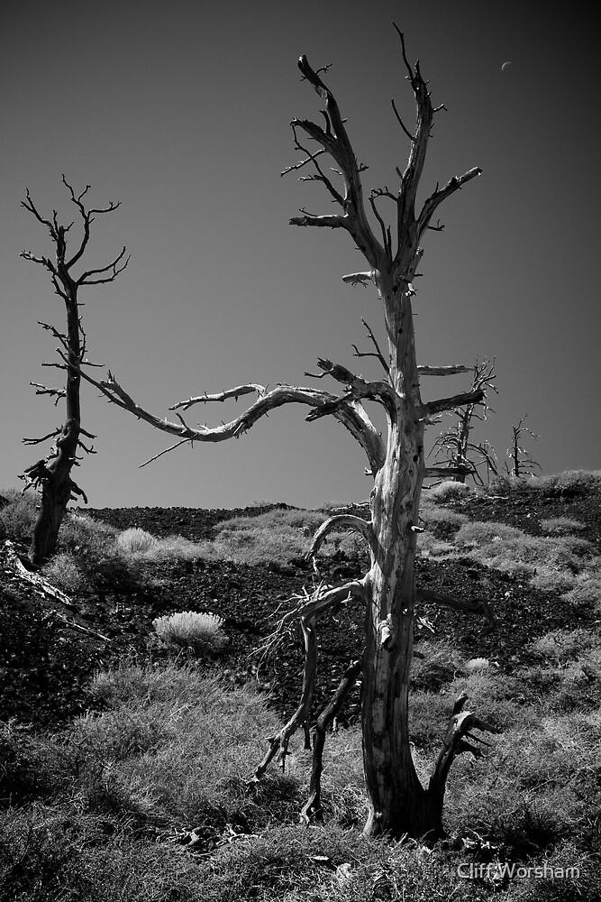 Desolate by Cliff Worsham