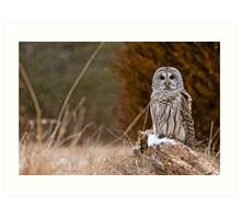 Barred Owl on log Art Print