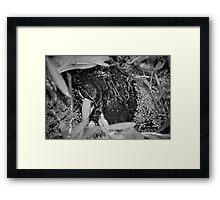 Momma Gator Framed Print