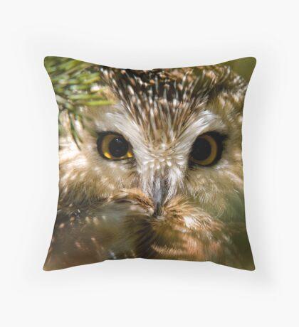 Northern Saw Whet Owl Throw Pillow