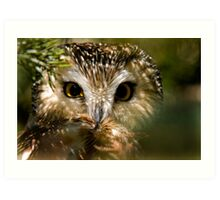 Northern Saw Whet Owl Art Print