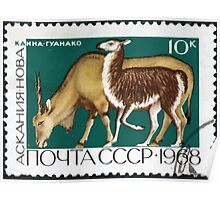 Fauna series The Soviet Union 1968 CPA 3679 stamp Eland and Guanaco Askania Nova cancelled USSR Poster