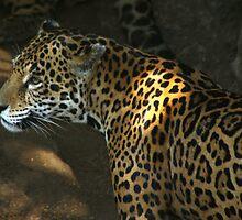 The Jaguar by Don Rankin